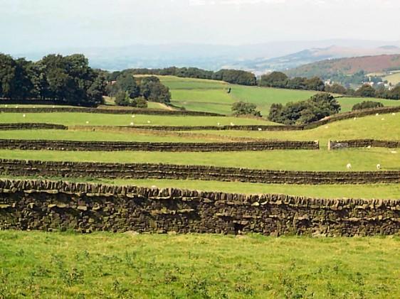 dry-stone-walls-steeton-moor-55907-1